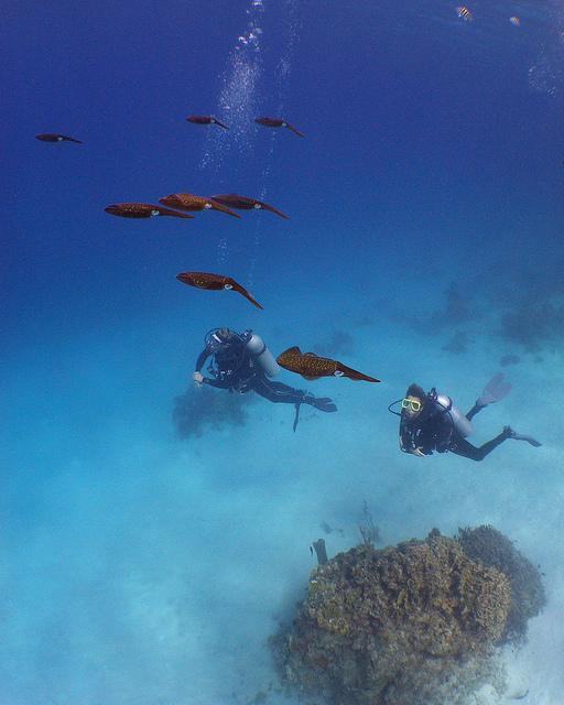 Roatan dive shops and resorts roatan diving for Roatan dive resort